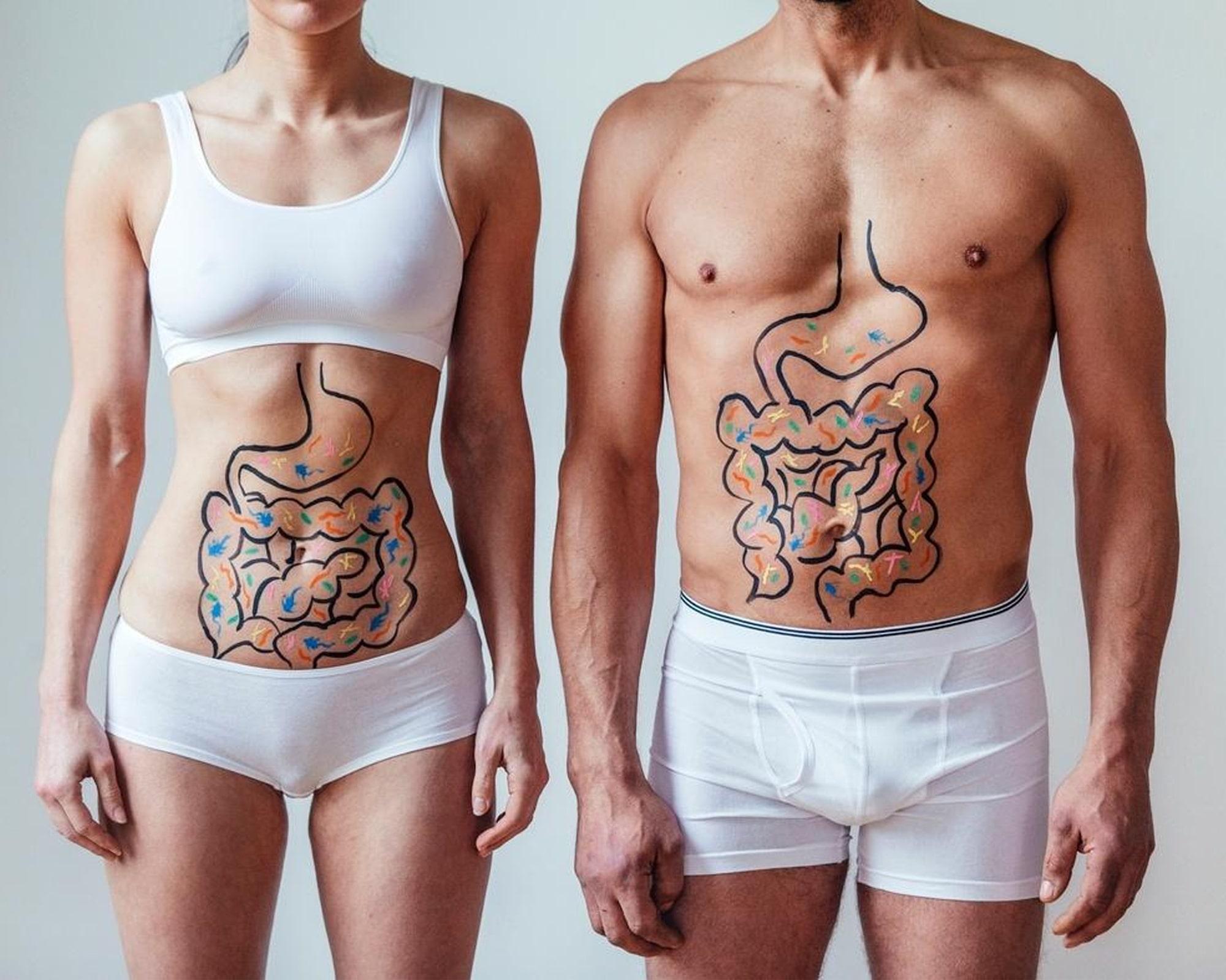 O que é Microbiota Intestinal